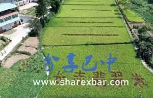 南江翡翠米种植基地